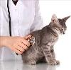 Ветеринарные клиники в Чухломе